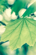 Preview iPhone wallpaper Green foliage, twigs, hazy