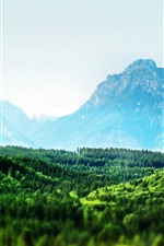 iPhone fondos de pantalla Bosque verde, montañas, mañana.