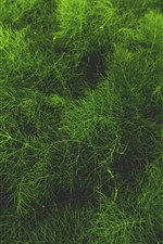 Preview iPhone wallpaper Green grass, plants