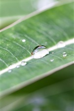 Preview iPhone wallpaper Green leaf, water droplets, stripes