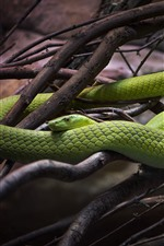 Preview iPhone wallpaper Green snake, twigs
