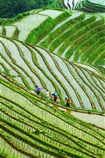 Preview iPhone wallpaper Guangxi Longsheng Terrace, rice fields, people, China