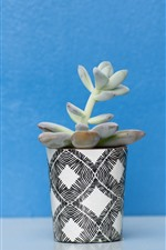 Houseplant, succulent plants, cup, blue background