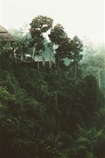 Preview iPhone wallpaper Jungle, trees, house