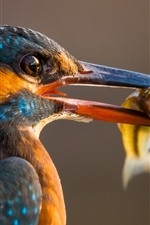 Preview iPhone wallpaper Kingfisher, beak, catch a fish