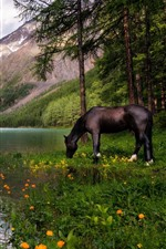Preview iPhone wallpaper Lake, trees, horse, mountains