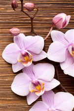 Preview iPhone wallpaper Light pink phalaenopsis, flowers, wood board