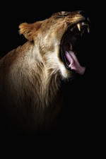 Preview iPhone wallpaper Lion yawn, mouth, teeth, darkness