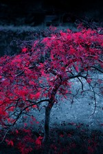 Preview iPhone wallpaper Lonely tree, red maple leaves, dawn