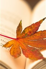 Preview iPhone wallpaper Maple leaf, book, hazy