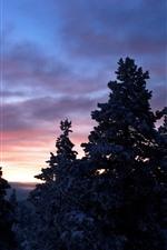 Moon, trees, snow, winter, dusk