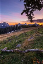 Mountains, slope, trees, sunset