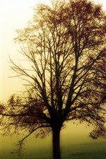 Preview iPhone wallpaper One tree, morning, fog