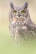 Preview iPhone wallpaper Owl, hazy, fog