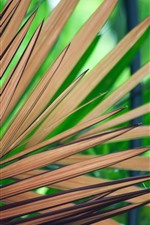 Preview iPhone wallpaper Palm leaves, stripes