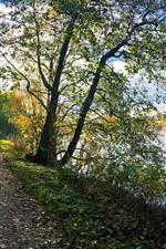 Park, trees, path, bike, lake, sunshine