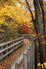 Park, wood bridge, trees, yellow and red leaves, autumn