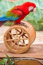 Preview iPhone wallpaper Parrot play a wheel