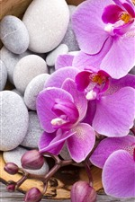 Preview iPhone wallpaper Phalaenopsis, pink flowers, stones, basket