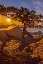 Preview iPhone wallpaper Pine tree, lake, sunrise, dawn
