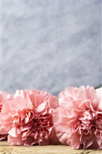 Preview iPhone wallpaper Pink carnation flowers, water droplets