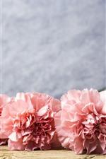 미리보기 iPhone 배경 화면 핑크 카네이션 꽃, 물방울