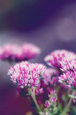 Preview iPhone wallpaper Pink flowers bloom, hazy, spring