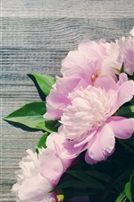 Preview iPhone wallpaper Pink peonies, flowers