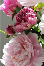 Preview iPhone wallpaper Pink peony flowers, gray background