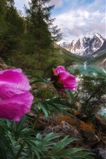 Preview iPhone wallpaper Pink peony flowers, river, mountains