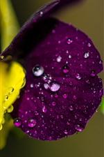 Purple flower macro photography, water droplets, hazy