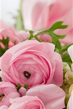 Preview iPhone wallpaper Ranunculus, pink flowers, hazy