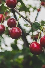 Preview iPhone wallpaper Ripe cherries, fruit, twigs