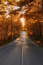 Road, trees, sunshine, autumn