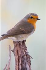Preview iPhone wallpaper Robin bird, stump