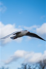 Preview iPhone wallpaper Seagull flight, wings, sky, clouds