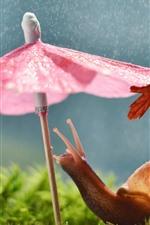 미리보기 iPhone 배경 화면 달팽이, 우산, 비, 재미있는 동물
