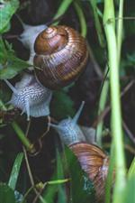 Preview iPhone wallpaper Snails, plants, wet