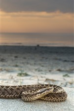 Preview iPhone wallpaper Snake, sea, sunset