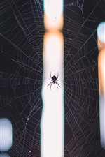 Preview iPhone wallpaper Spider and web, insect