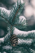 Preview iPhone wallpaper Spruce, snow, twigs