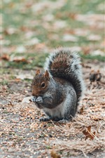 Squirrel, ground, leaves