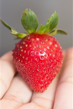 Preview iPhone wallpaper Strawberry in hand
