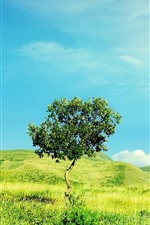 Preview iPhone wallpaper Summer, green grass, hills, lonely tree