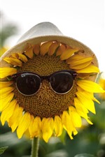 Preview iPhone wallpaper Sunflowers, sunglass, hat, funny picture