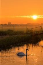 iPhone fondos de pantalla Amanecer, campo, río, cisne, mañana, niebla.