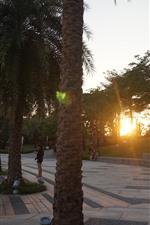 Sunset, trees, park, people
