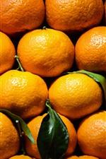 Tangerine, oranges, fruit