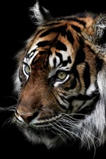 Preview iPhone wallpaper Tiger, face, darkness