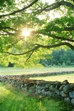Tree, green leaves, grass, rocks, sun rays, summer